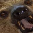 Emoji for slothWut
