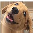 Emoji for woweeBOYE