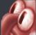 squidREE