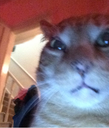 :teddycat: Discord Emote