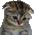 :sadcat: Discord Emote