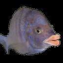 :fishy: Discord Emote