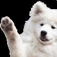 :doggowave: Discord Emote