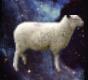 :sheepshape: Discord Emote