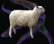 :sheepelder: Discord Emote
