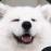 :pup: Discord Emote