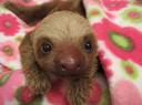 :slothy: Discord Emote