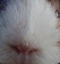 sniffsnuff