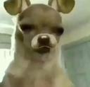 :egirldoggo: Discord Emote