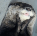 :Otter1: Discord Emote