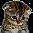 :FTGPcatsad: Discord Emote