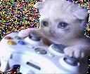 xboxcat