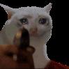 Sad_Cat_shoot