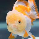 goldfishAngry