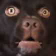 :FTGPdoggoscared1: Discord Emote