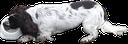 :dogsip: Discord Emote