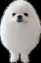 :eggdog: Discord Emote