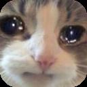 :catsad2: Discord Emote