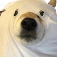 :ghostBOYE: Discord Emote