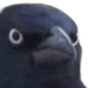 :crowJudgement: Discord Emote