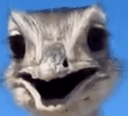 :emu: Discord Emote