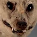 :FTGPdogextinct: Discord Emote