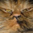 Emoji for judgemental_cat