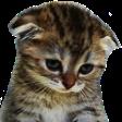 Emoji for SadKitteh