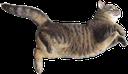 Emoji for cathop