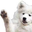 Emoji for white_doggo
