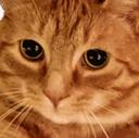 :FTGPcatsadboi: Discord Emote