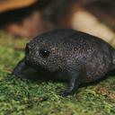 :Froggo: Discord Emote