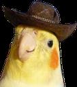 :cowbirb: Discord Emote