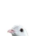 Emoji for pigeonpeek