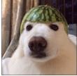 mnp_doggomelon
