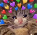 :wholesomeness: Discord Emote