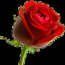 :roseHD: Discord Emote