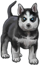 :HuskyPuppy: Discord Emote