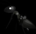 :fly: Discord Emote