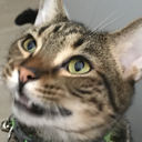 ushis_cat