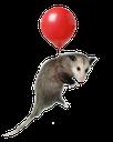:possumballoon: Discord Emote