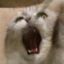 :BLYA: Discord Emote