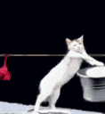 c_laundrycat