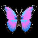 rhyybutterfly