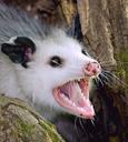 Emoji for Possum