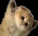 :CAT_dont: Discord Emote