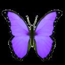 zzbutterfly