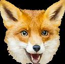 :RealFoxHours: Discord Emote
