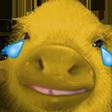 PigCri