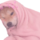 sillydoggy